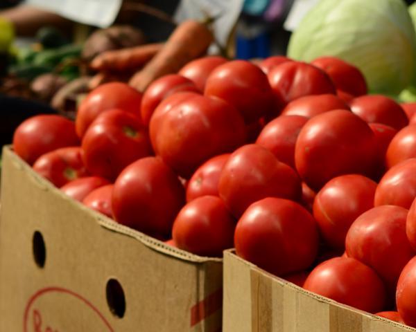 Российская Федерация с22сентября запрещает поставки овощей ифруктов изЕгипта