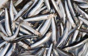 ФАС направила Президенту России доклад о мерах, направленных на ограничение роста цен на рыбу