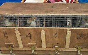 Сотрудники Южной оперативной таможни задержали 33 обезьяны и 8 носух