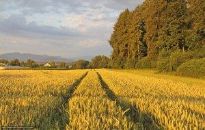 О нарушении АО «Путиловец Юг» правил использования семян сельскохозяйственных растений
