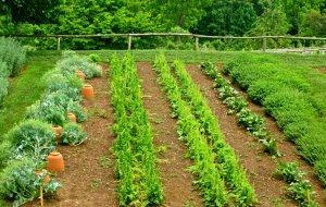 Агроном рассказала, как сэкономить на овощах без вреда для здоровья