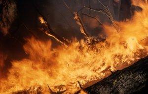 Сочинский национальный парк снова во власти пожара