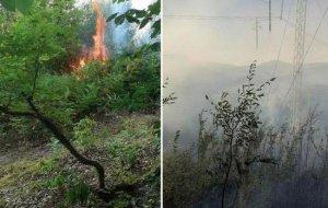 Сочинском национальном парке разгорелся лесной пожар