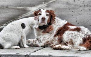 По всей России в честь Дня защиты бездомных животных пройдет благотворительная акция «Добролап»