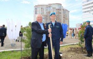 Кедры Победы в Новороссийске